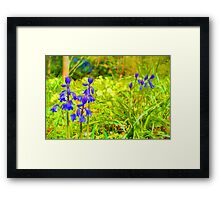 Two bluebells surrounded by yellow and white wild flowers and grass (Abstract) Framed Print