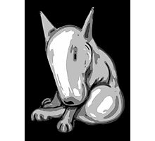 Bashful English Bull Terrier Photographic Print