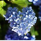 Hydrangea heart... by Judy Clark