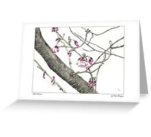 April Blossoms Greeting Card