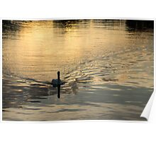 Golden Watercolor Ripples - the Gliding Swan Poster