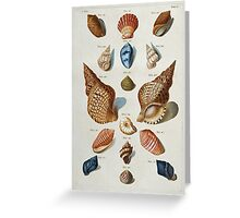 Vintage famous art - Franz Michael Regenfuss - A Selection Of Seashells Greeting Card