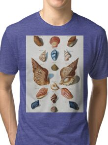 Vintage famous art - Franz Michael Regenfuss - A Selection Of Seashells Tri-blend T-Shirt