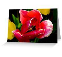 2016 Blooms 4 Greeting Card