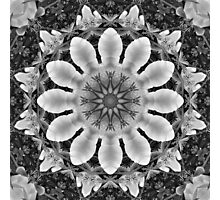 Floral mandala-style, Blossoms black, white, gray Photographic Print