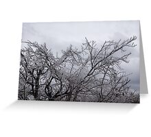 Niagara's Artistic Hand - Sparkling Frozen Tree  Greeting Card