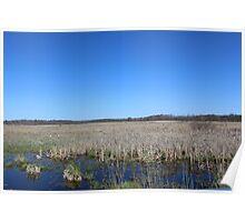 Wetlands in Edwardsburg Michigan Poster