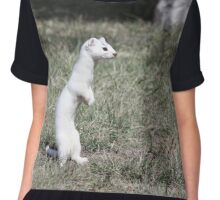 Long-tailed Weasel Chiffon Top