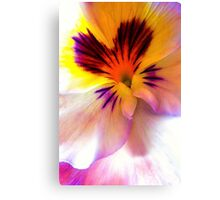 White, Yellow, and Purple Pansy Canvas Print
