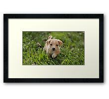 Cute Little Puppy Dog Photography Framed Print