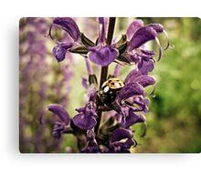 Ladybug and Lavender Gardenscape Canvas Print