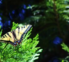 Tiger Swallowtail, black and pale yellow with black tiger-stripes Sticker