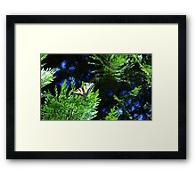 Tiger Swallowtail, black and pale yellow with black tiger-stripes Framed Print