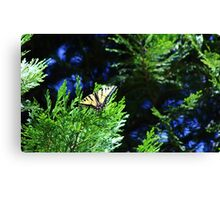 Tiger Swallowtail, black and pale yellow with black tiger-stripes Canvas Print
