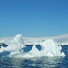Antarctic Sea Dragon by John Douglas