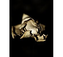 Dried  Flowers  Series -Jasmin- Photographic Print