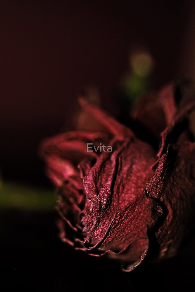 Dried Flowers Series -Red Rose- by Evita