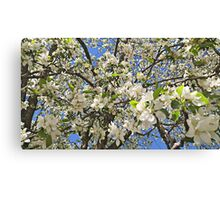 Thousands of White Flowers Canvas Print