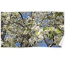 Thousands of White Flowers Poster