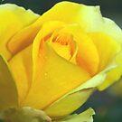 Rose of hope by ♥⊱ B. Randi Bailey