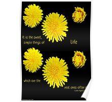 Dandelion Simplicity Poster