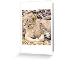 2016 Cub Greeting Card