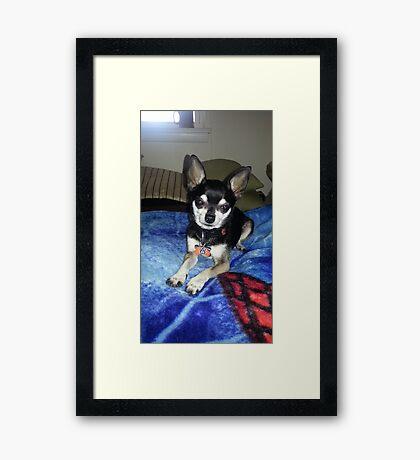 Mr. Tux! Framed Print