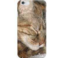 Cat Sleeping iPhone Case/Skin