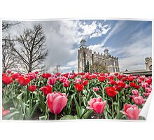 Tulips at Logan Temple Poster