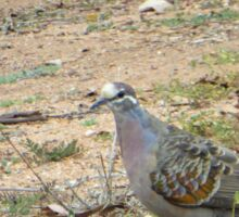 Native Flock Bronzewing Pigeon! Through Glass, 'Arilka' Sticker
