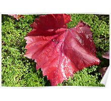Autumn leaf on bright green Moss, back patio. 'Arilka'.   Poster
