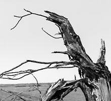 The Old Tree by sedge808