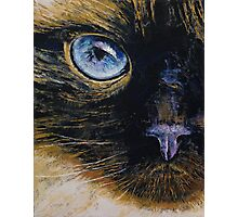 Burmese Cat Photographic Print