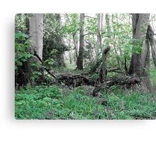 Woodland Scene - Green Canvas Print
