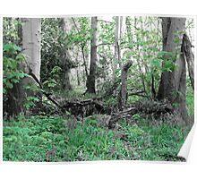 Woodland Scene - Green Poster