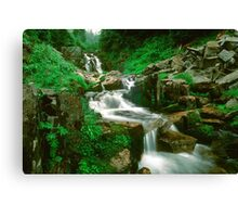 Washington Stream 1008-10 Canvas Print