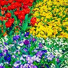 Floriade - Blaze of Colour by TonyCrehan
