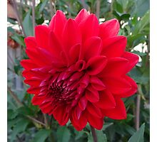 ANOTHER BIG RED FLOWER Photographic Print