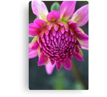 Dahlias Face Canvas Print