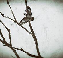 Flight by Lynn Starner