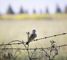 Western Kingbird by Lynn Starner
