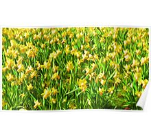 Daffodil Field ( Painting ) Poster