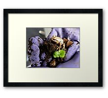 Whistling Brown Tree Frog - NZ Framed Print