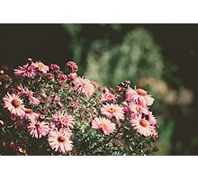 Pink Flowers with Butterfly Filtered Photographic Print