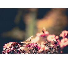 Pink Flowers with Butterfly Filtered 4 Photographic Print