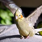 Gentle Cinnamon - Cockatiel by AndreaEL