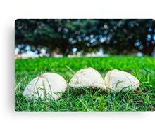 Northbridge Mushrooms Canvas Print