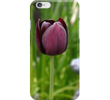 Lone tulip  1 iPhone Case/Skin