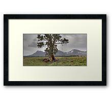Rain at Wilpena Framed Print
