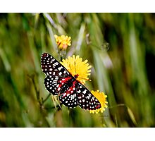 A Red Dotted Checkerspot Photographic Print